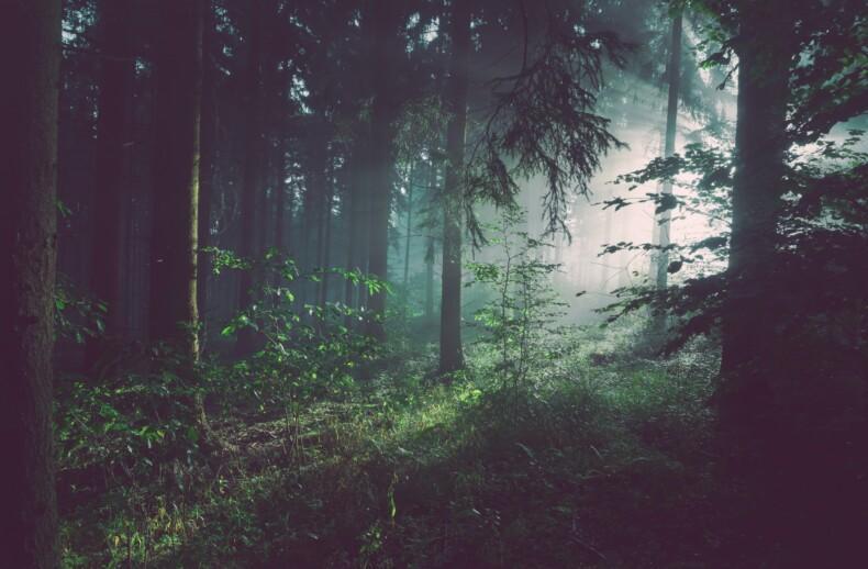 lasy kluczowe zrodlo dobrobytu Planety